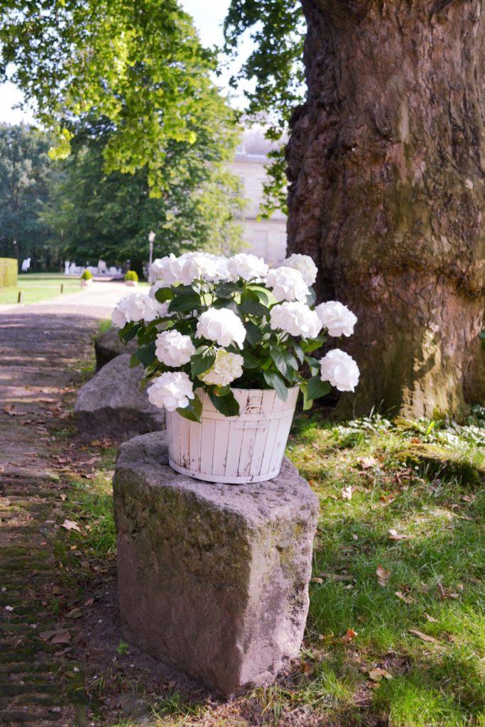 Blumen Langoed Huis de Voogst