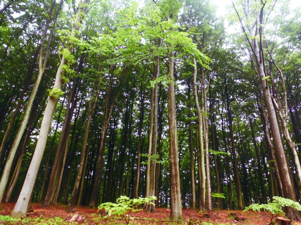 Wald im Nationalpark auf Rügen