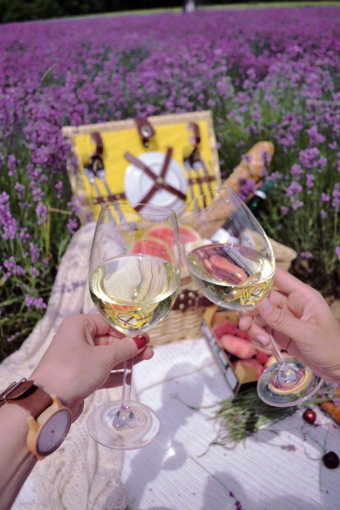 Wein in Lippischer Provence