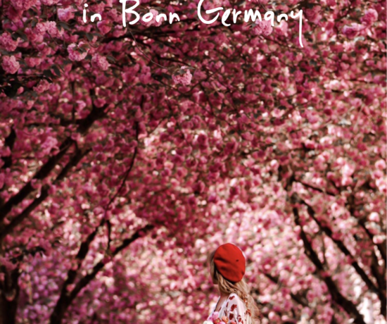 Cherry Blossom in Bon Germany